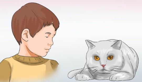 cat-test